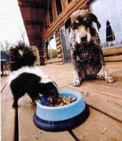 skunk and dog patient endurance